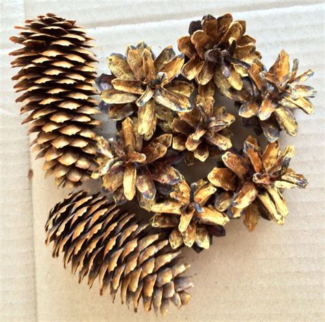gold pine cones decoration gold spruce cones natural cones