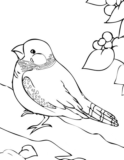 zebra finch coloring page free coloring pages of finch