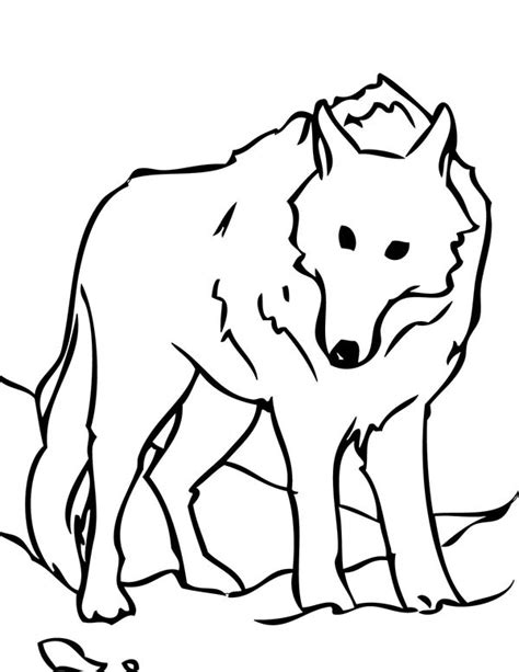 coloring page arctic wolf arctic wolf clipart coloring page pencil and in color