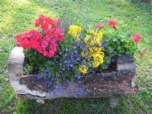 flores para jardins grama e orqu 237 deas im 243 veis sempre