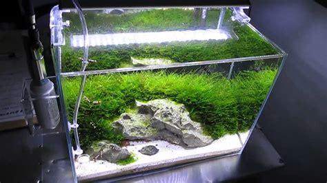 Bibit Rumput Air Dekorasi Aquarium ada mini m shrimp planted aquarium with co2 and leds and moss