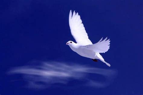 imagenes de palomas blancas gratis cr 244 nica e prosa mar 231 o 2013
