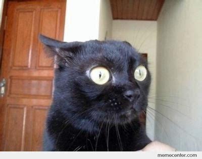 Scared Cat Meme - scared cat meme memes