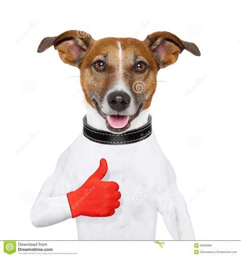 i like dogs i like royalty free stock image image 30289966