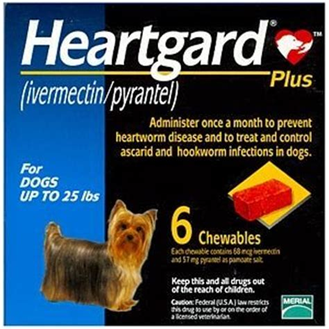 heartworm medicine for puppies heartworm medicine for dogs a few questions answered