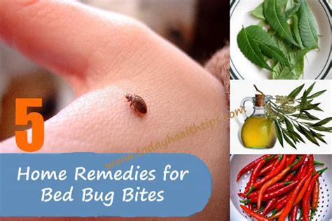 organic way to get rid of bed bugs tea bags home