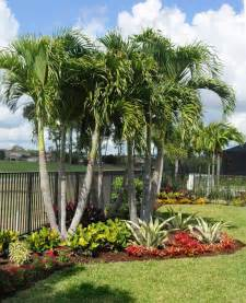 149 best south florida landscaping images on