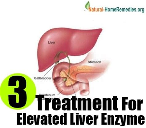 liver enzymes high elevated liver enzymes causes and treatment home remedies remedy