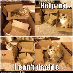Cat Trap Meme - quot the cat traps are working quot on pinterest cat traps