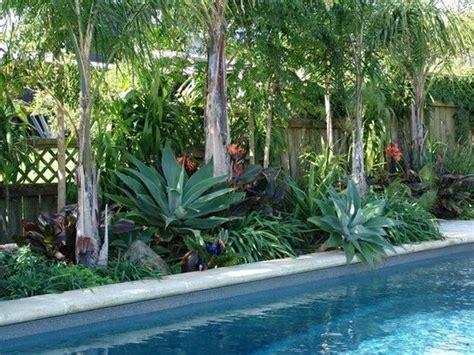 subtropical pool landscaping gardening sub tropical tropical landscaping pinterest