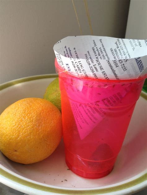 Fruit Flies In Kitchen by Capture Fruit Flies In Your Kitchen By Taping A Cone
