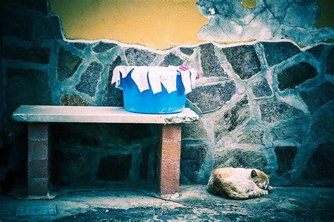 comune di lavello lavello pz