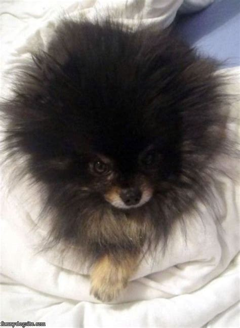 10 dog haircuts gone wrong 10 best dog haircuts gone bad images on pinterest dog