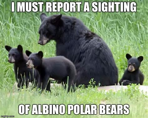 Bears Memes - black bears imgflip