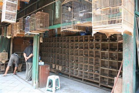berburu burung di pasar pramuka ini pasar burung legendaris di jakarta gedoor