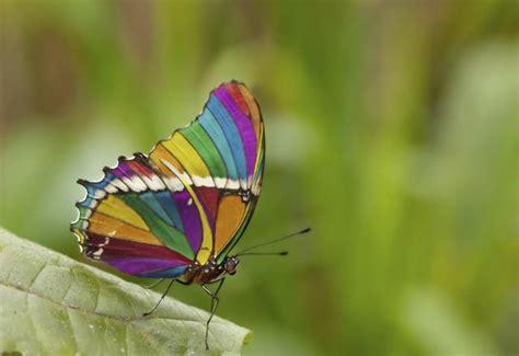 imagenes de mariposas de verdad 9 cosas sorprendentes sobre las mariposas que no deber 237 as