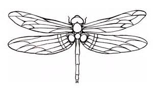 dragonfly template dragonfly outline www imgkid the image kid has it
