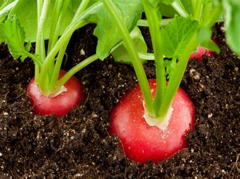 6 vegetables that are the same plant plants that can grow together boldsky