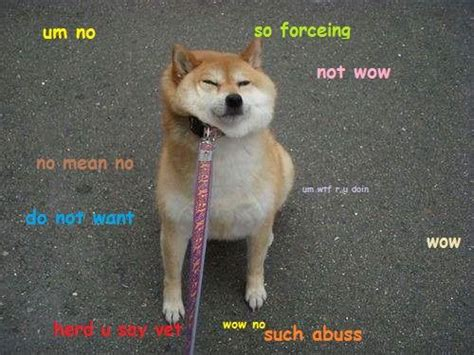 Shiba Inu Meme - 25 best ideas about doge meme on pinterest funny doge