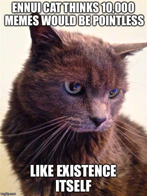 Cat Meme Maker - ennui cat imgflip