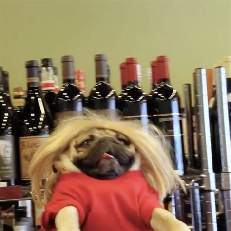 doug the pug college 30 times doug the pug described your college experience