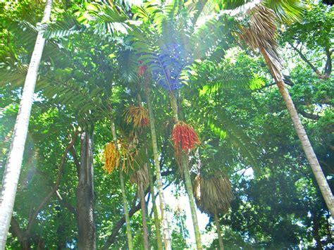 foster botanical gardens in honolulu hi parent reviews