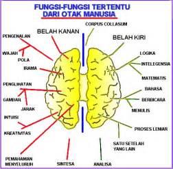 dunia sekitar kita fungsi otak manusia
