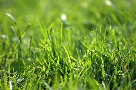 klee im rasen das k 246 nnen sie tun chip - Mittel Gegen Klee Im Rasen