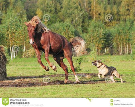fotos animales juntos el caballo y el perro juegan juntos imagen de archivo