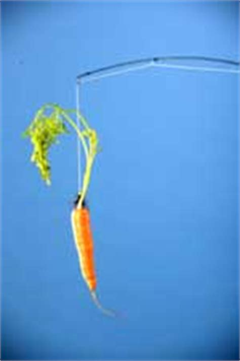 Turning A Carrot Into A Stick Fishing Stick That Is by Lothian The Magazine For Edinburgh And The Lothians
