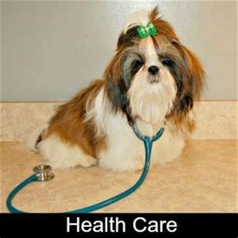 shih tzu puppy care information shih tzu puppy information