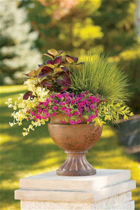 Flower Containers Containers For Plants Flower Pots Flowers Magazine
