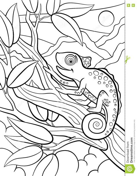 cute wild animals coloring pages cute wild animal coloring pages
