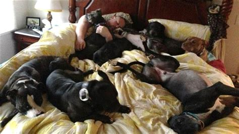 dog not allowed in bedroom couple creates giant bed to sleep comfortably with 8 dogs today com
