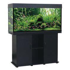gallons aquarium size aquarium ideas pinterest