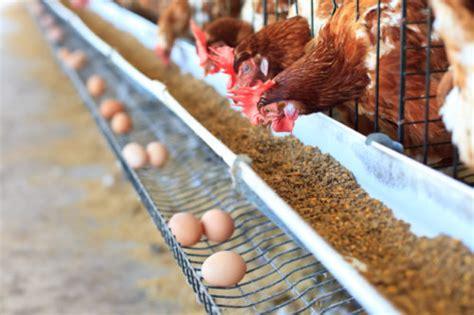 alimentazione animale alimentazione animale tema centrale dell 11 176 convegno ifrm