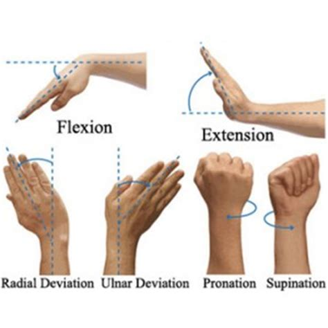 your wrists to your arms and now to your hair scuncis hair wrist exercises to strengthen your wrists for mma training
