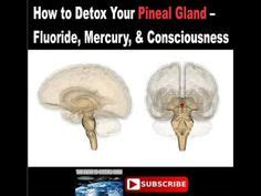 Mercury Detox Brain Damage by Pineal Gland Thalamus Hypothalamus Pituitary Gland