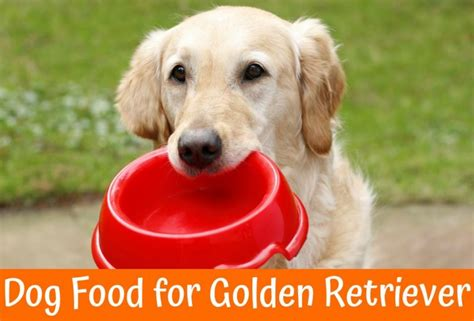 food golden retriever the best food for golden retriever review us bones