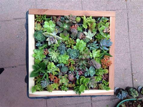 Succulent Frame My Farmscape - my succulent frame peggy s succulents