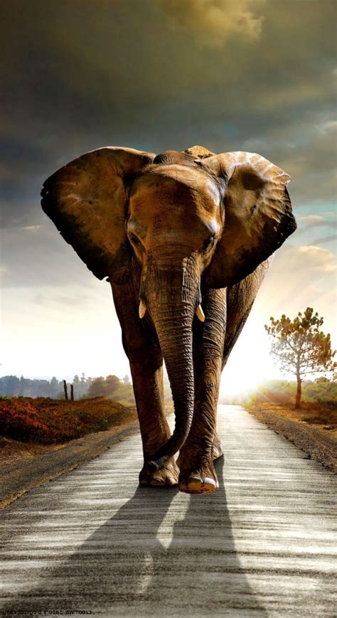 african elephant android wallpapers wallpaper cave