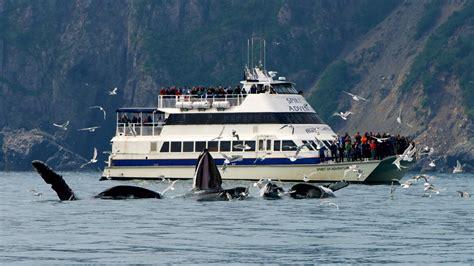 kenai boat tours 6 hour kenai fjords national park cruise major marine tours
