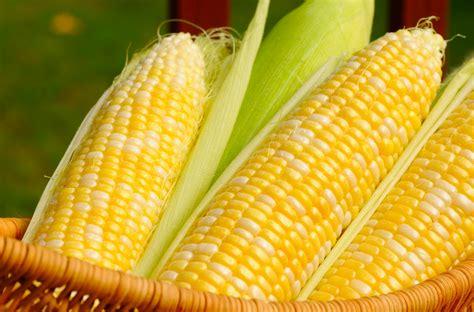 jagung sebagai sumber karbohidrat  mengandung
