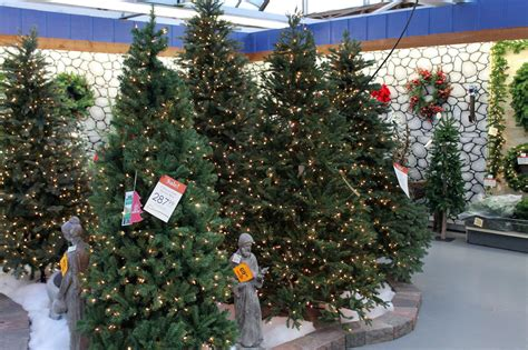 places to buy christmas trees victoria b