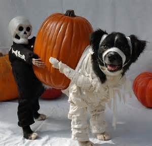dogs halloween costume 18 dogs that absolutely love their halloween costumes