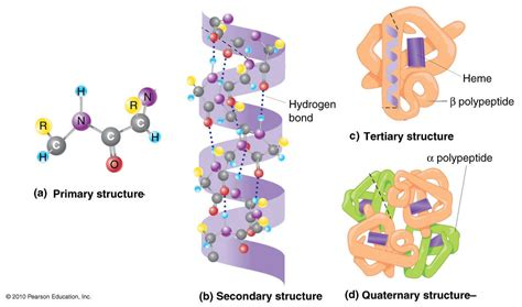 protein structure secondary structure biochem and i