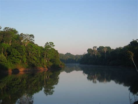 amazon america amazon rainforest south america world for travel