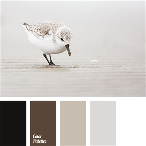 color black and white photos brown and black color palette ideas