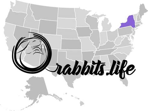 buy a nyc buy a rabbit in new york rabbits for sale rabbits