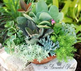 Succulent House by The Decorated House How To Create A Succulent Dish